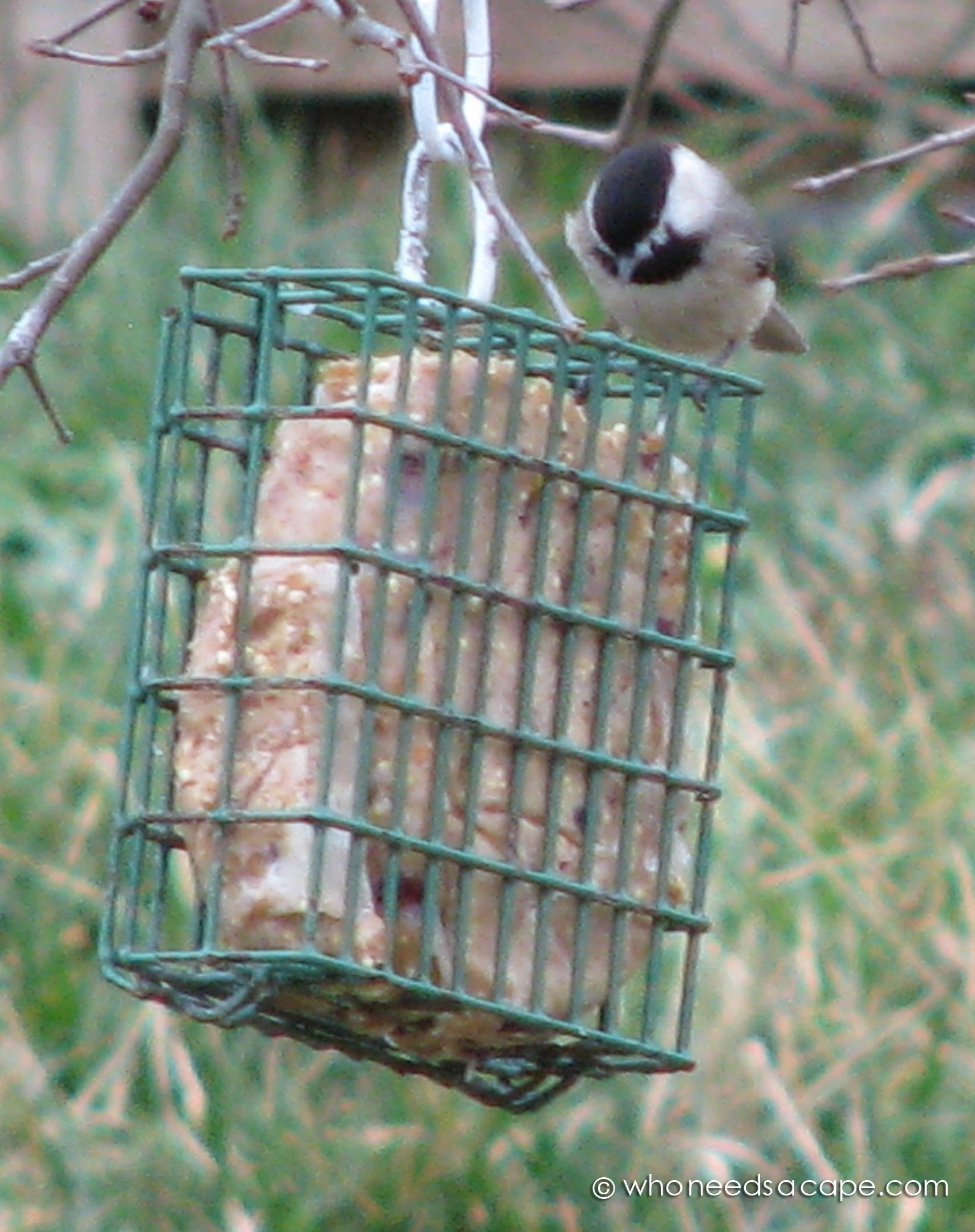 homemade bird feeders bird suet who needs a cape 12902