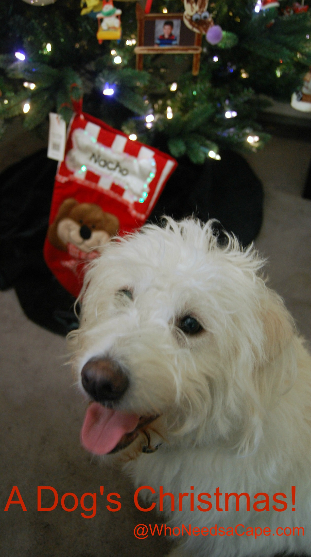 a-dogs-christmas-get-him-what-he-wants