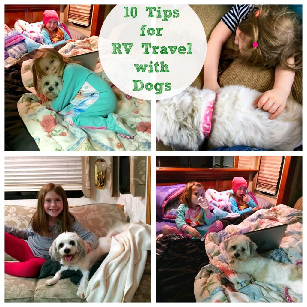 10 Tips for RV Travel with Dogs, easy suggestions for packing and making trips easier for dogs before hitting the road on your next trip.