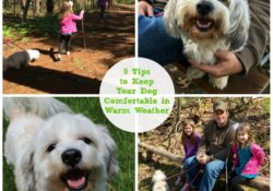 5 Tips to Keep Your Dog Comfortable in Warm Weather