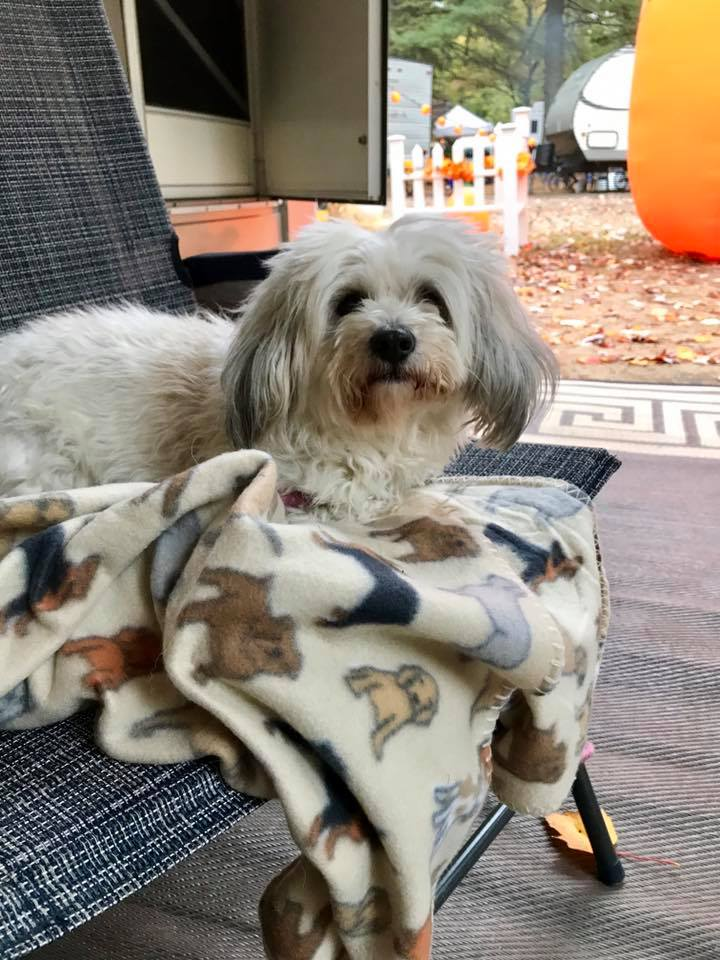 Sharing today How We Keep Our Dog Happy and Comfortable. Our furry family friend deserves the best in return for the unconditional love they give to us.
